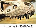 Carnivorous Dinosaur Skeletons...