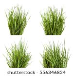 bundle of green grass isolated... | Shutterstock . vector #556346824