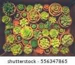 cactus on wooden background ... | Shutterstock . vector #556347865