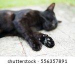 cat paws of sleeping black cat | Shutterstock . vector #556357891