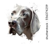 portrait of a dog of the breed  ... | Shutterstock . vector #556374259