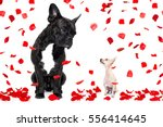 a big french bulldog and small... | Shutterstock . vector #556414645