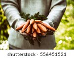 organic vegetables. healthy... | Shutterstock . vector #556451521