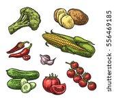set vegetables. cucumbers ... | Shutterstock .eps vector #556469185