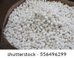 a pile of silkworm eggs  | Shutterstock . vector #556496299
