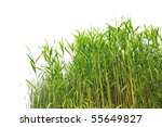 Close Up View Of Reed Along The ...
