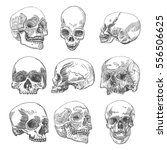 big set of anatomic skulls in... | Shutterstock .eps vector #556506625
