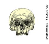 anatomic skull  weathered and... | Shutterstock .eps vector #556506739