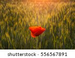 Lush Flower Meadow With Red...