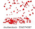 Stock photo rose petals fall to the floor isolated background 556574587