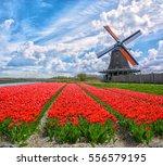 Dutch Windmills And Fields Of...