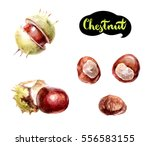 Medical Chestnut Isolated On...