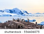 Rocky coastline overcrowded by gentoo pengins and glacier with icebergs in the background at Neco bay, Antarctic