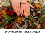 hands of the newlyweds with... | Shutterstock . vector #556629025
