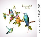 Humming Birds. Set Of Three...