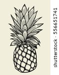 pineapplefruit. hand drawn... | Shutterstock .eps vector #556651741
