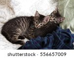 Stock photo  kittens cuddle with each other 556657009