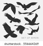 set of illustration of... | Shutterstock .eps vector #556664269
