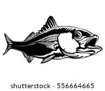 red snapper isolated on white... | Shutterstock .eps vector #556664665
