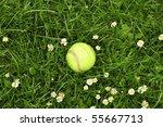 Tennis Ball In The Garden