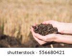 soil in hand  palm  cultivated... | Shutterstock . vector #556680421