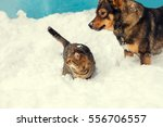Stock photo cat and dog best friends cat and dog playing together outdoor on the snow in winter 556706557