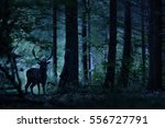 Deer Stag Standing In The...
