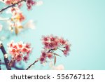close up of beautiful vintage... | Shutterstock . vector #556767121