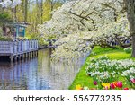 beautiful spring landscape with ... | Shutterstock . vector #556773235