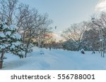 the next day the heavy snow... | Shutterstock . vector #556788001