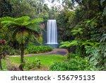 millaa millaa falls in the... | Shutterstock . vector #556795135