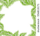 vector frame with green exotic... | Shutterstock . vector #556813171