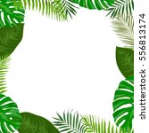 vector frame with green exotic... | Shutterstock .eps vector #556813174