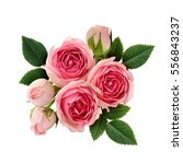 Stock photo pink rose flowers arrangement isolated on white 556843237