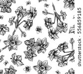 hand drawn vector seamless... | Shutterstock .eps vector #556859185