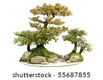 china bonsai | Shutterstock . vector #55687855