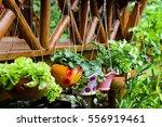 hanging planter | Shutterstock . vector #556919461