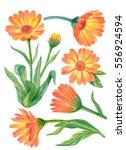 watercolor flower set  hand... | Shutterstock . vector #556924594