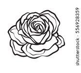 rose flower isolated outline... | Shutterstock .eps vector #556928359