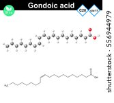 gondoic unsaturated fatty acid... | Shutterstock .eps vector #556944979