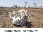 Dry African Landscape With...