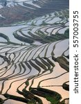 Small photo of Terraced rice field in water season of Hani ethnic people in Yunnan province, China.