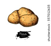 potato vector drawing. isolated ... | Shutterstock .eps vector #557012635
