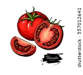 tomato vector drawing. isolated ... | Shutterstock .eps vector #557012641