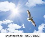 Photo Of Big Seagull In Sky...