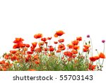 Beautiful Red Poppies Isolated...