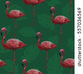 seamless pattern with flamingos ... | Shutterstock .eps vector #557036569