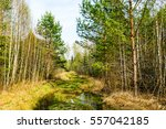 spring forest trail | Shutterstock . vector #557042185