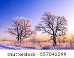 winter trees on winter sunset... | Shutterstock . vector #557042299