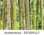 Bamboo Green Canes. Natural...